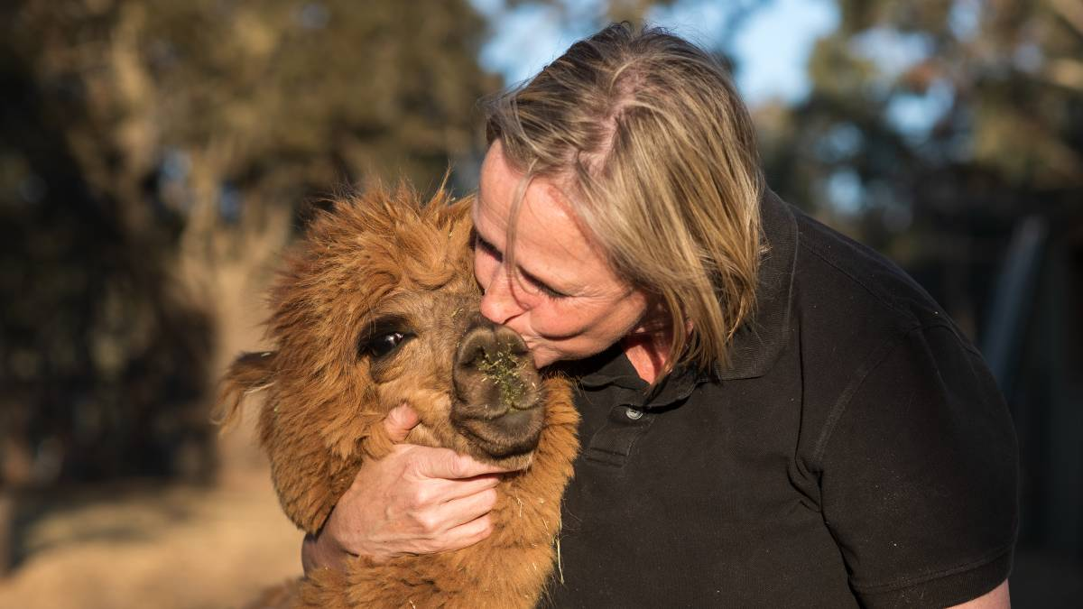 Sanctuary stays heaven for animal-loving travellers