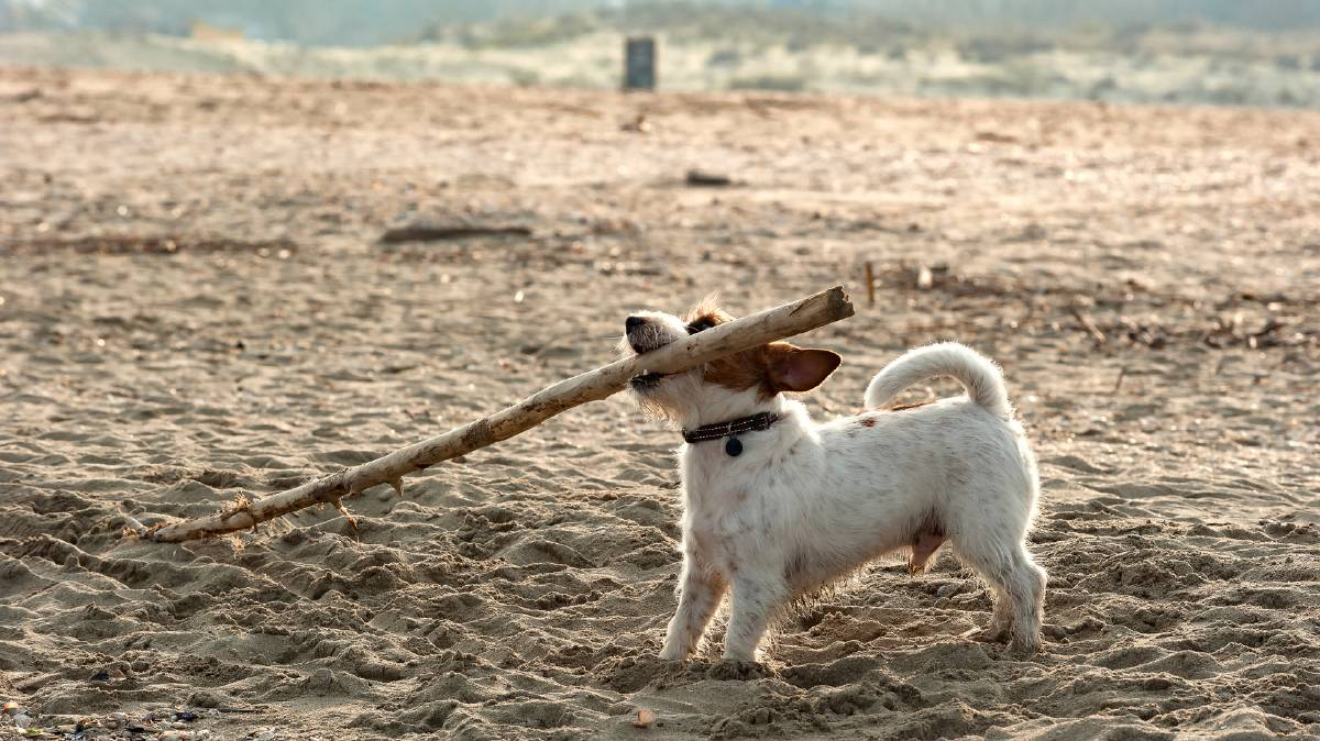 It's not the size of the dog in the fight .... but the stick in its mouth.